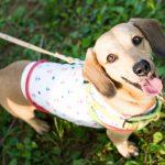 小型犬の写真