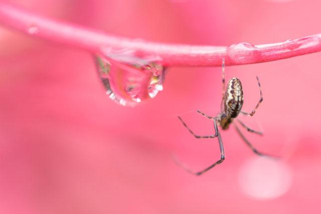 蜘蛛が糸の上を歩いている写真