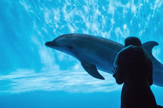 イルカが泳いでいる写真