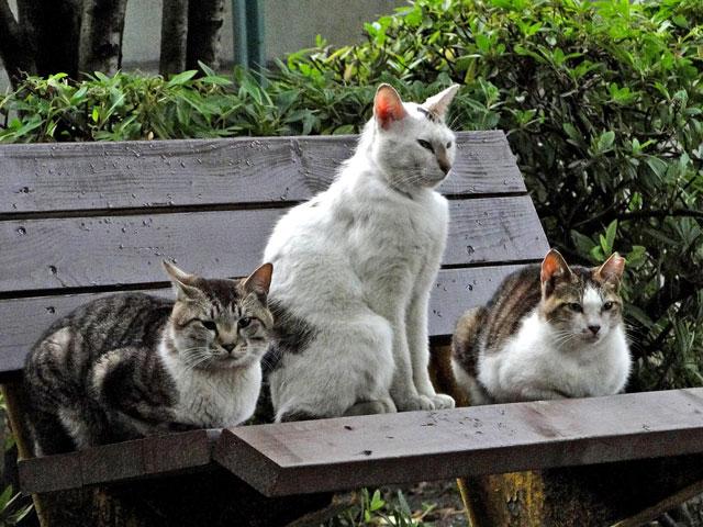 群れている猫3匹