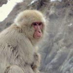 猿がこちらを見ている写真