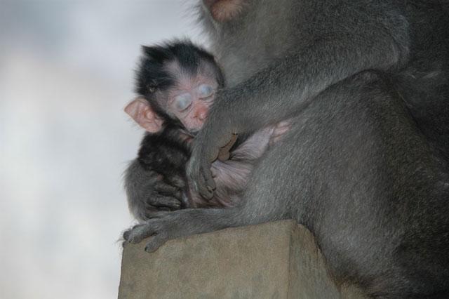 猿の赤ちゃんの写真