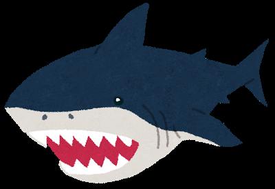 サメが口を開けている写真