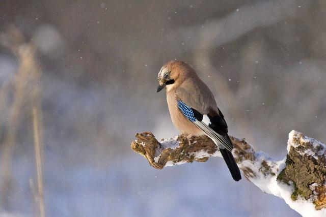 鳥が木に止まっている写真