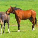 草原にいる馬の写真
