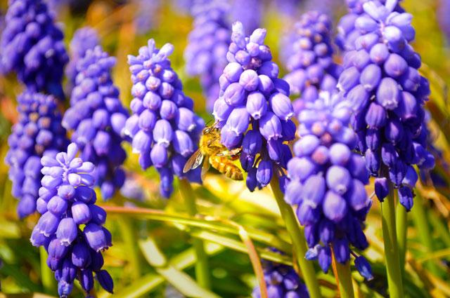 花に止まっているミツバチの写真