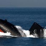 潜水艦の写真
