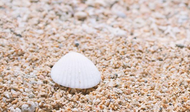 砂浜にある貝殻の写真